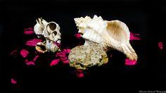 Shells by Sebastian Lacherski on 500px