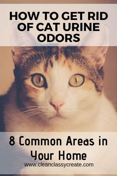 How to Get Rid of Cat Urine Odors in Your Home Common Areas) - Clean & Classy Cleaning Cat Urine, Remove Cat Urine Smell, Cat Pee Smell, Cat Urine Smells, Cleaning Hacks, Deep Cleaning, Cleaning Products, Fall Cleaning, Cat Urine Remover