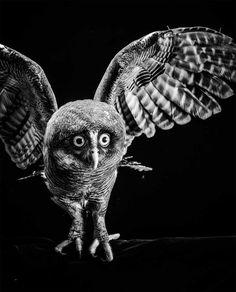 BIRD Gary Heery Book-completemmockup-94.jpg