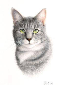 Katzenportrait - Peter Höhsl