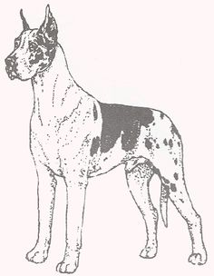 Lps great dane colouring pages page 2 sketch coloring page for Great dane coloring pages