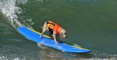 Campenato de Surf para Cães