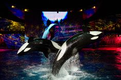 From Shamu to Santa, there will be something for everyone in the family at SeaWorld's Christmas Celebration!