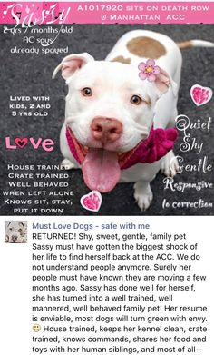 HAPPYYYYY❤️❤️ SAFE❤️❤️ 8/15/16 PLEASE KEEP AND LOVE HER FOREVER THIS TIME❤️❤️ RETURN AFTER 1 DAY 06/24/16 PET CONFL --- SAFE 6-23-2016 --- RETURNED 05/19/16 MOVEPRIVA --- SAFE RTO 10/30/14 --- Manhattan Center SASSY - A1017920 *** DOH HOLD 10/18/14 *** SPAYED FEMALE, WHITE / TAN, PIT BULL MIX, 1 yr OWNER SUR - ONHOLDHERE, HOLD FOR DOH-NHB Reason PETS CONFL Intake Date 10/18/2014 http://nycdogs.urgentpodr.org/2016/05/sassy-a1017920/