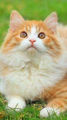 Pretty, Fluffy Kitty