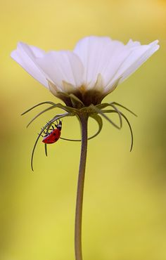 ☀Under the umbrella by Krzysztof Winnik....love the simplicity and the lady bug would be a new twist for me.
