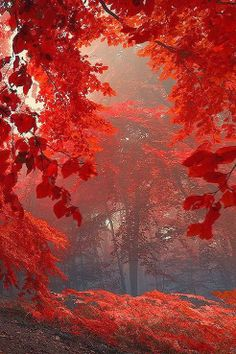 Beautiful Mother Nature Autumn at it´s best! All Nature, Amazing Nature, Autumn Forest, Belle Photo, Pretty Pictures, Beautiful Landscapes, Autumn Leaves, Red Leaves, Autumn Trees