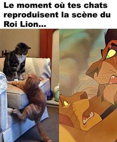 Funny pictures about Scar And Mufasa In Real Life. Oh, and cool pics about Scar And Mufasa In Real Life. Also, Scar And Mufasa In Real Life photos. Funny Animal Jokes, Funny Cat Memes, Cute Funny Animals, Funny Relatable Memes, Funny Animal Pictures, Funny Cute, Funniest Animals, Animal Humor, Top Funny