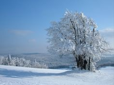 Winter. by JazzyJess.deviantart.com on @DeviantArt