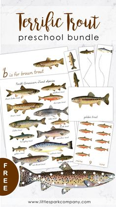 All delivered to your inbox completely free! Trout themed preschool fine motor, language and math activities. Montessori Science, Montessori Homeschool, Homeschooling, Language Activities, Toddler Activities, Preschool Activities, Free Preschool, Preschool Lessons, Montessori Materials