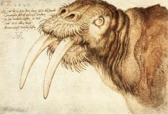 Albrecht Dürer (German, 1471–1528). Walrus. 1521. Pen drawing with watercolours. British Museum, London. ~Via N Jean Maxwell
