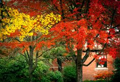 autumn foliage by Cåsbr, via Flickr in Corvallis, Oregon
