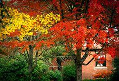 autumn foliage by Cåsbr, via Flickr in Corvallis, Oregon