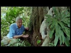 awesome Sir David Attenborough Climbs a Ladder In Order to Surprise a Laid Back Sloth in a Tree