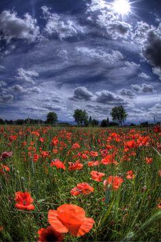 Poppy field with amazing sky