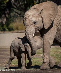 We need to save the elephants                                                                                                                                                      More