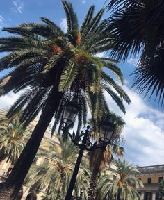 Sunny day in Barcelona with the real tropical vibe #palmtrees #barcelona #summer #spain