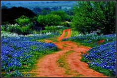 The scenic road Willow Loop, texas. Do this in spring, when the flowers are out! Wednesday 14th of march 2012