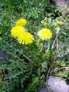 Life Is Good, Detox, Flora, Herbs, Health, Nature, Plants, Naturaleza, Health Care
