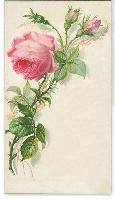 Long stem ~ pink rose & buds