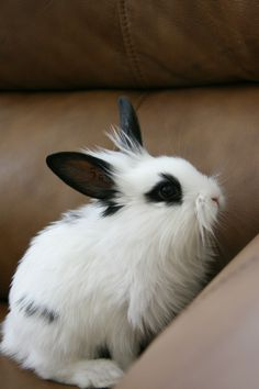 1000+ images about Rabbit on Pinterest | Bunnies, Hiphop ...