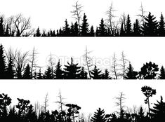 Set of vector horizontal silhouettes coniferous treetops forest .