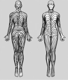 Our Skin Is Covered With Invisible Stripes. Human skin is overlaid with what… Cell Line, Real Tattoo, Body Systems, Head To Toe, Beautiful Patterns, Character Concept, Human Body, Overlays, Cover