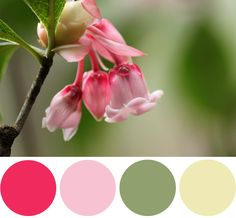 Color Palette Inspiration: Chinese New Year Flower