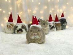 Bunny army at christmas