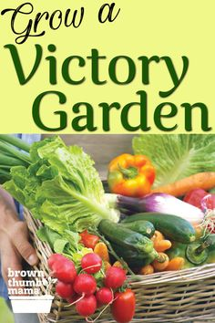 Make Grandma proud by growing your own fresh healthy vegetables just like she did! It's easy to grow a vegetable garden with these simple instructions. Healthy Vegetables, Growing Vegetables, Veggies, Growing Carrots, Growing Grapes, Gardening Zones, Gardening Tips, Container Gardening Vegetables, Home