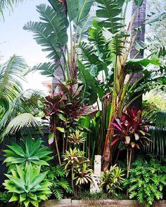 Small Tropical Gardens, Tropical Garden Design, Tropical Landscaping, Landscaping With Rocks, Tropical Flowers, Tropical Plants, Front Yard Landscaping, Small Gardens, Landscaping Ideas