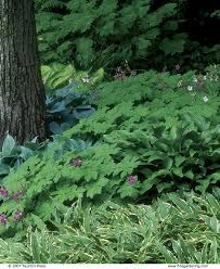 Image result for images of plants under trees