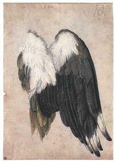 kriemhildsrevenge:  Albrecht Dürer: Kiebitzflügel (1500) Pinsel und Feder in Tinte auf Pergament, aquarelliert,  Deckweiß- und Goldhöhung, 1...