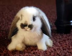 Image result for cute little bunnies