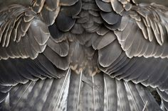 Gray, #gray and #gray feathers