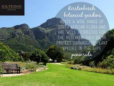 Cape Town | Kirstenbosch Botanical Gardens Table Mountain, Plant Species, True Beauty, Cape Town, Botanical Gardens, Flora, Africa, City, Plants