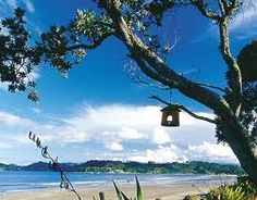 Carole's Chatter: Whitianga and Buffalo Beach