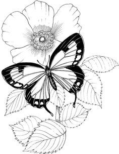 Butterfly Papillon Mariposas Vlinders Wings Graceful Amazing Coloring pages… Butterfly Coloring Page, Butterfly Drawing, Flower Coloring Pages, Coloring Book Pages, Printable Coloring Pages, Papillon Butterfly, Vintage Butterfly, Butterfly Flowers, Coloring Sheets