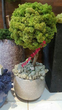 스칸디아모스 대구 대리점 > 스칸디아모스 디자인 > 스칸디아모스 샘플 및 주문 > 스칸디아모스 ... Moss Wall Art, Moss Art, Moss Garden, Garden Art, Tree Designs, Flower Designs, Vertikal Garden, Island Moos, Moss Graffiti