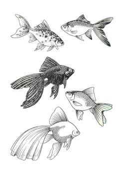 Vintage Tropical Fish Print
