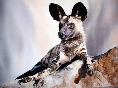 Pam Quinlan | WATERCOLOR | Wild Dog on Rock