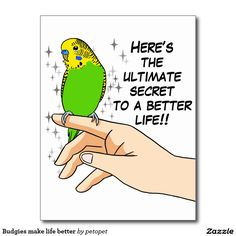 "Budgies make life better postcard. Cute green budgerigar drawing with text: ""Here's the ultimate secret to a better life!!"" Perfect gift for parakeet parrents, budgie moms, budgie dads, budgie owners, budgie lovers and everyone else that love parakeets. #funnyparrottext #funnybudgiedrawing #budgieparakeet #budgieparrot #ilovebudgieparrots #crazyparakeetlady #parrotperson #crazybirdlady #birdquote #parrotjoke #funnyparakeethumor #parakeetsarefunny #funnygreenparakeet"