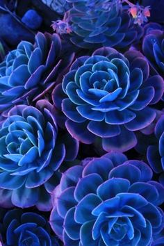 beautiful blue and purple flowers <3