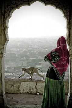 INDIA: Monkey and Woman enjoying view in Jaipur, Rajastan, We Are The World, People Of The World, Wonders Of The World, Wolf Cry, Cultures Du Monde, India Images, Amazing India, Goa India, Delhi India
