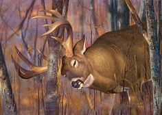 Explore Chad Hunt's photos on Photobucket. Wildlife Paintings, Wildlife Art, Animal Paintings, Deer Paintings, Hirsch Wallpaper, Deer Wallpaper, Hunting Painting, Hunting Art, Hunting Quotes