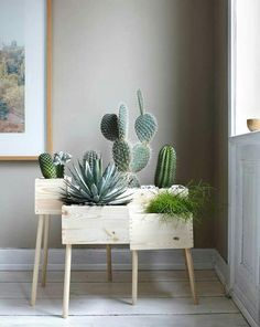 DIY: Blumenkasten aus Holz selber machen - Bild 13 - Cactus dans caisse de vin More More You are in the right place about cute office decor small
