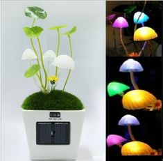 Solar Light Up Mushroom Lamps | Greatest Stuff On Earth