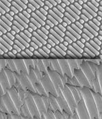 Sharklet technology inhibits bacterial growth and survival and mimics the properties of shark skin. Today the technology is being used in numerous public settings including hospitals, child care and fitness centers.