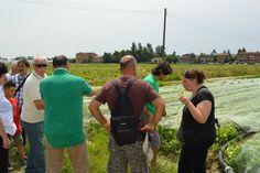 14 giugno 2015: AZIENDA APERTA Giri in navetta alla scoperta dei nostri campi.  #aziendaaperta #lattugazanarini #campi  Seguici sulla nostra pagina Facebook: www.facebook.com/LattugaZanarini