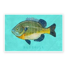 This Bluegill Art Print from my Freshwater Fish Art Series makes the perfect gift for your favorite fisherman or fisherwoman. My colorful interpretation of a Bluegill will make a memorable Father's Day Gift for Dad, your husband or boyfriend. Not ...